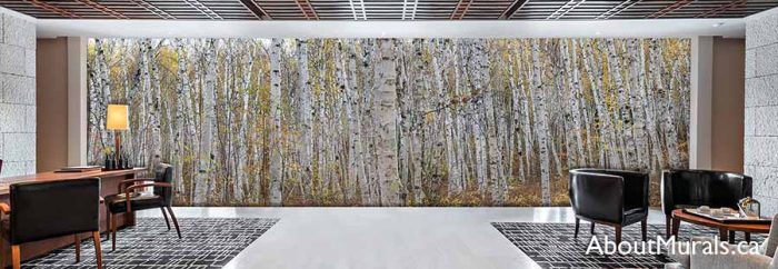 Infinite Birch Forest Wall Mural in a hotel lobby, sold by AboutMurals.ca