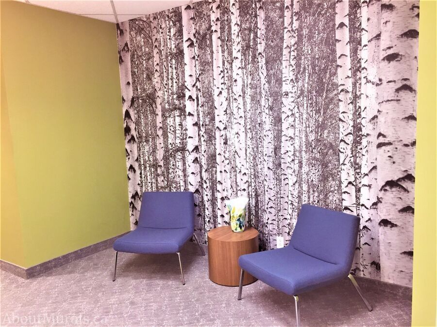 A black and white birch tree wallpaper in an office reception area by AboutMurals.ca