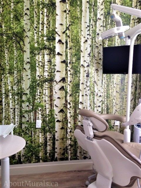 A birch wallpaper on the walls of a dentist office. Sold by AboutMurals.ca