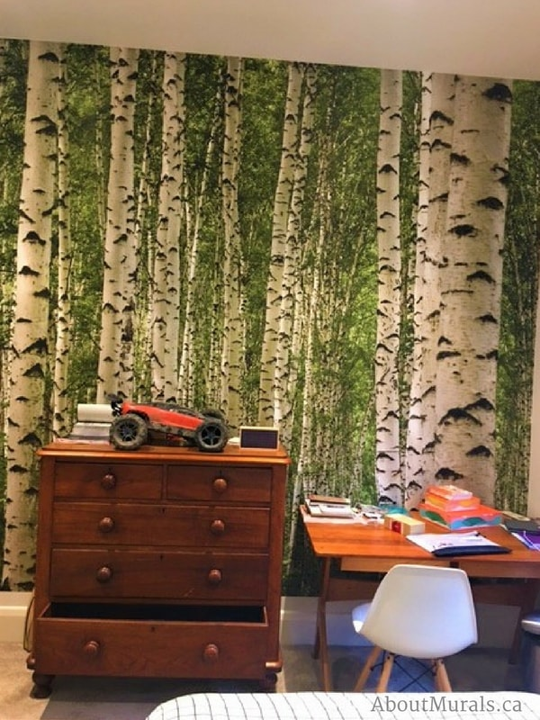 A birch wallpaper in green in a boy's bedroom, found behind a dresser and a desk, from AboutMurals.ca