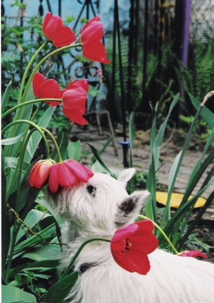 A photo of a dog used as inspiration for a garden mural painted by Adrienne of AboutMurals.ca