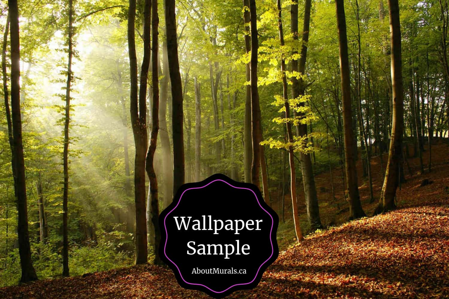 Sunbeams wallpaper sample sold by AboutMurals.ca featuring rays of sunshine diffusing through a forest canopy