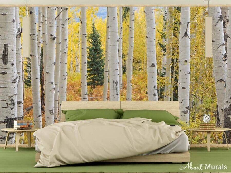 This Aspen tree wallpaper features an autumn forest of tall white trees. Aspen tree bedroom from AboutMurals.ca