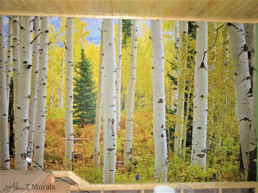This Aspen tree wallpaper features a fall forest in a living room. Birch Wallpaper sold by AboutMurals.ca